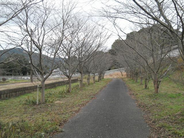 yoshi-sta_2