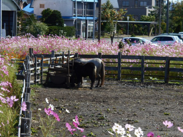 shin-totsukawa-pony